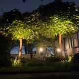 Bomen uitlichten met spots